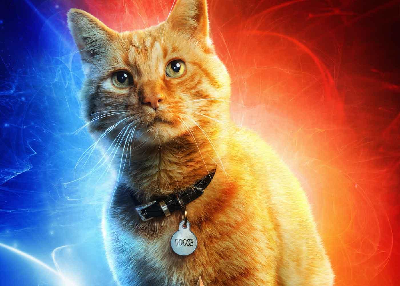 Nama Kucing Yang Berwarna Oren 81021 Nama Untuk Kucing Comel Lucu Dan Unik
